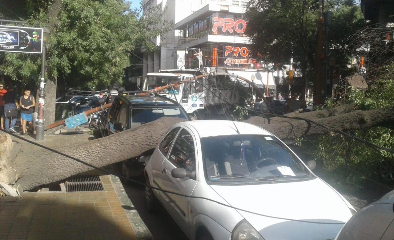 Susto en pleno centro: se cayeron dos árboles en San Juan y Buenos Aires