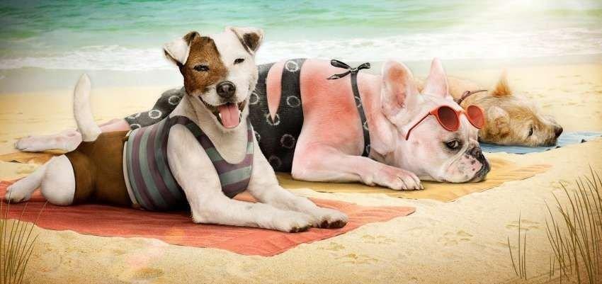 Consejos para proteger a tu mascota de las altas temperaturas
