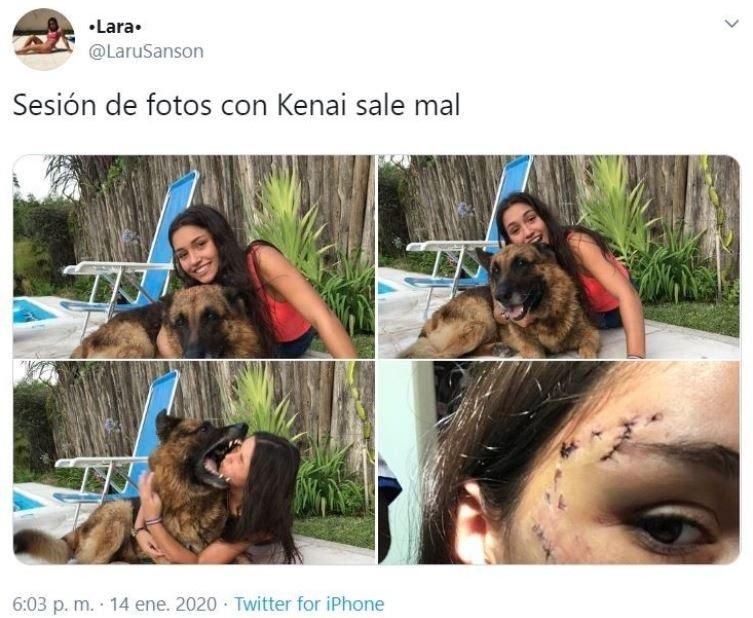 perro-fotos-mascota-ataque-kenai-chica