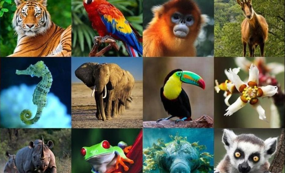 Horóscopo | ¿Qué animal sos según tu signo?