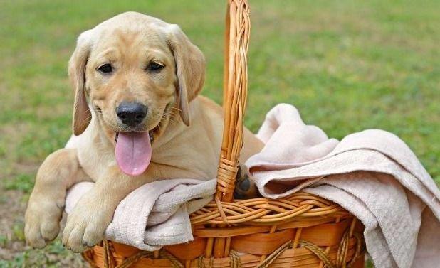 Verdades y mitos acerca de nuestros amigos caninos