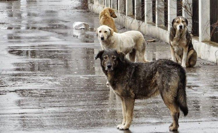 Mendoza Cada Vez Mueren Mas Perros Abandonados En Los Accesos