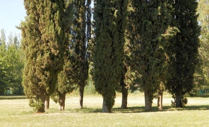 Mendoza será la primera provincia en tener un Censo de Arbolado Público