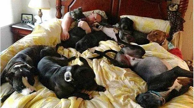 Tamaño XXL | La cama gigante que construyeron para sus perritos rescatados.