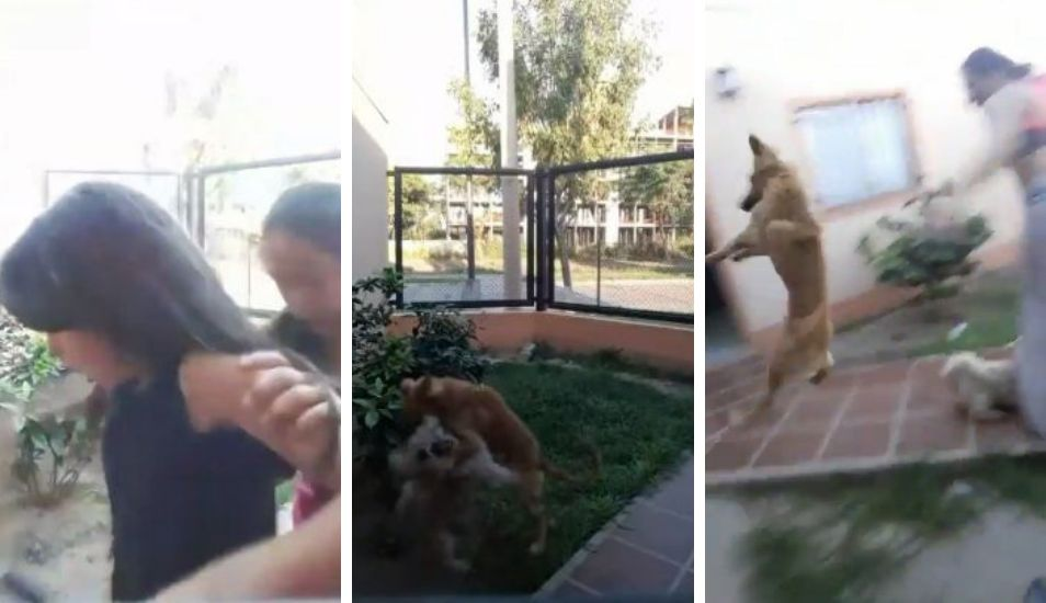 VIRAL | Mirá el video que posiblemente destrone al Chimuelo