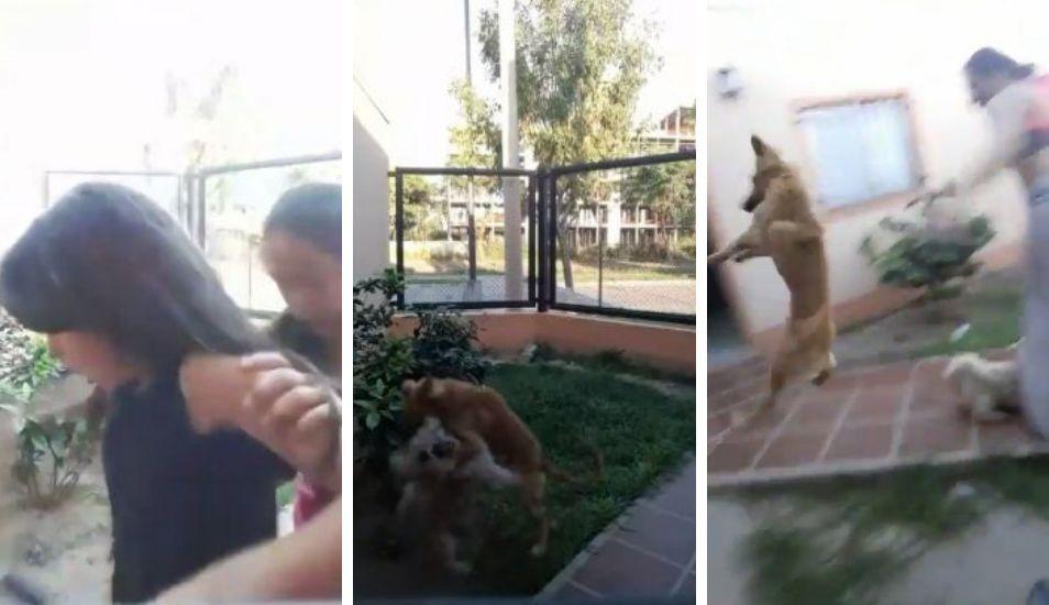 VIRAL | Mirá el video que posiblemente destrone al Chimuelo