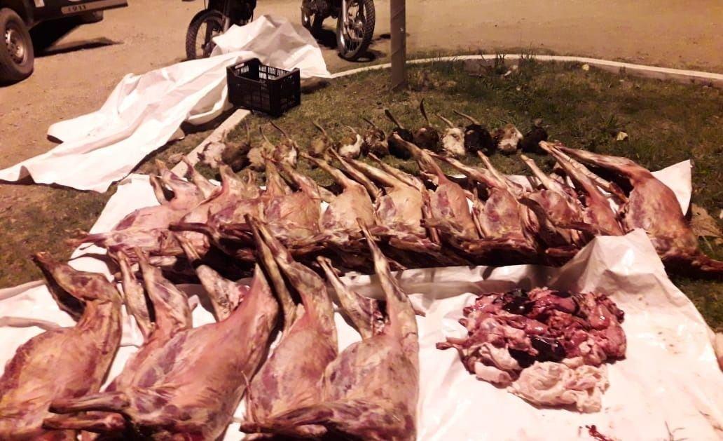 policiales-mendoza-san-rafael-camioneta-animales-cabras-faenados