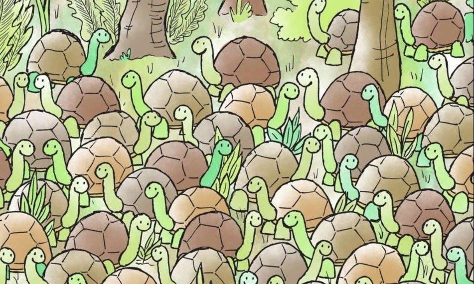 RETO VISUAL: encontrá la serpiente oculta entre las tortugas