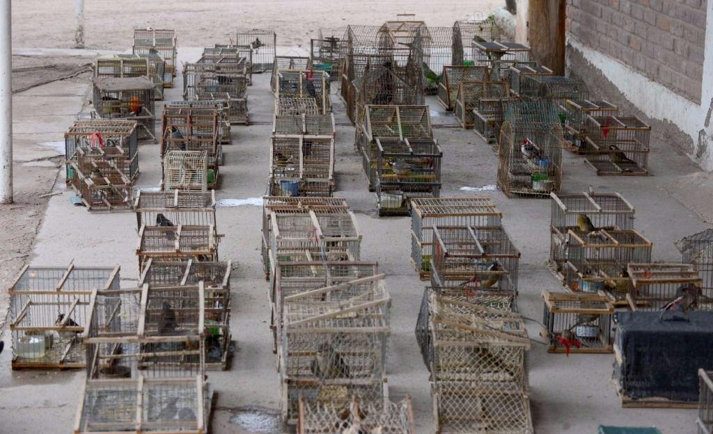 Golpe contra la venta y el tráfico ilegal de animales