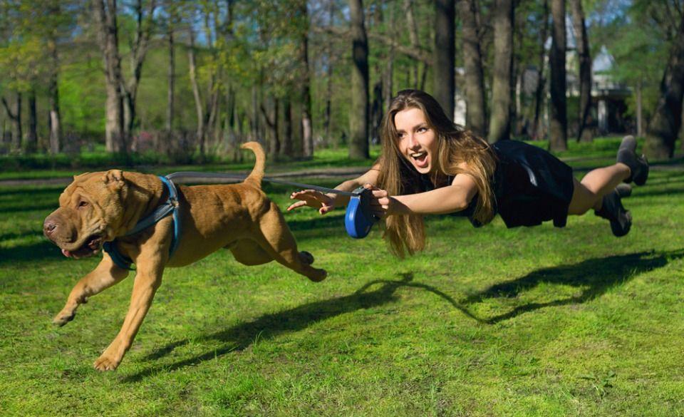 Lo dice la ciencia: aunque no lo creas tu perro te manipula