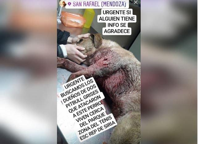 ataque-pitbull-san-rafael-perro-muerto-justicia