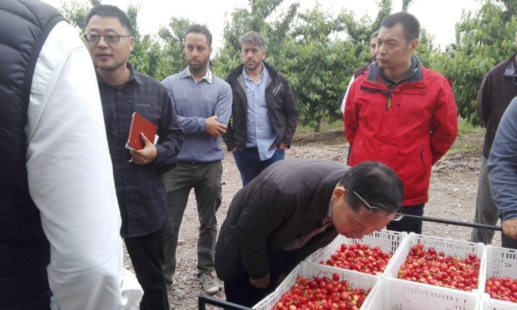 Las cerezas mendocinas comienzan a exportarse a Tailandia