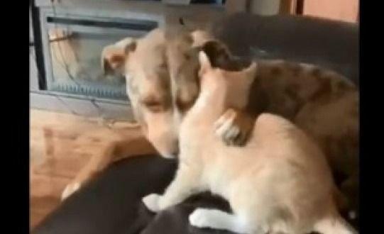 Todo era amor entre un gato y un perro hasta que...