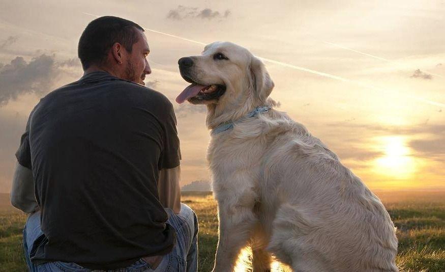 Según un estudio los perros sienten placer al escuchar la voz de su humano