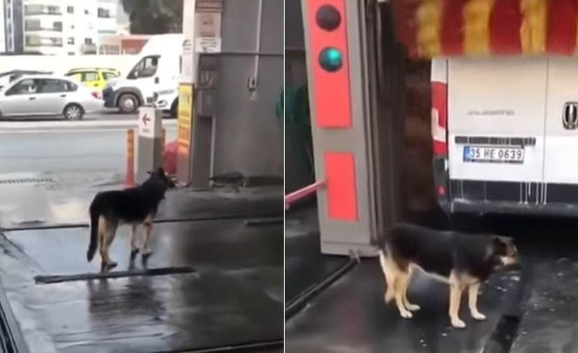 Perrito callejero vive día de spa en un lavadero