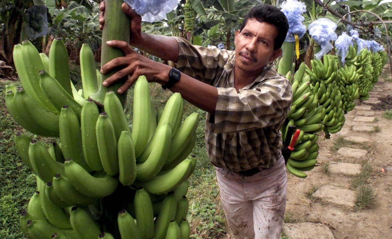 banana precio argentina