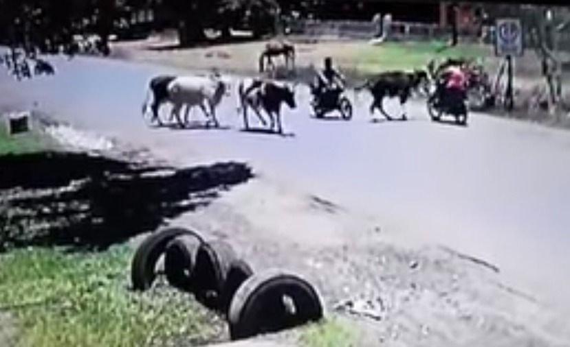 Vaca karateka le dio tremenda patada voladora a una motociclista